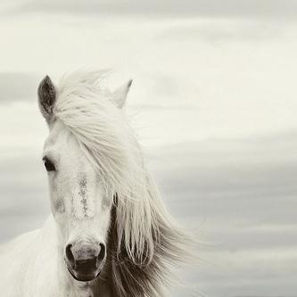 Chilean Folksong, Mi Caballo Blanco (My White Horse), Guitar Tab