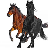 Download Lil Nas X feat. Billy Ray Cyrus 'Old Town Road (Remix)' printable sheet music notes, Country chords, tabs PDF and learn this Big Note Piano song in minutes