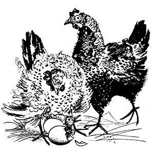 Scott Fore, Cluck Old Hen, Guitar Tab
